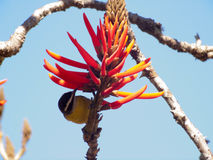 Bird and orange flower Royalty Free Stock Photography
