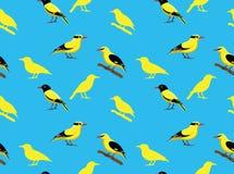 Bird Oriole Wallpaper Stock Photo