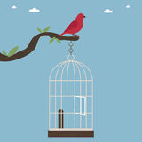 Bird out of cage Stock Images