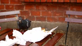 A bird in an outdoor cafe sits on a table and looks for leftover food. A bird in an outdoor cafe sits on a table and eat leftover food stock video footage