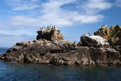 Bird outpost. France, Brittany. Nature Reserve Seven Islands. The main occupants are the seabirds Royalty Free Stock Image
