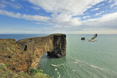 Bird over Dyrholaey sea rock arch, Iceland. Dyrholaey sea rock arch, Iceland Stock Images