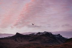 Bird over the mountains in the sky. In Iceland Royalty Free Stock Images