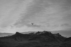 Bird over the mountains in the sky. In Iceland Royalty Free Stock Image