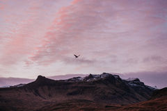Bird over the mountains in the sky. In Iceland Royalty Free Stock Photo