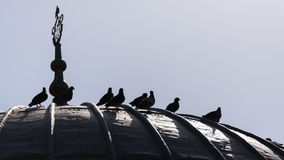 Bird over the roof. Pigeon over the roof in Turkey Royalty Free Stock Image