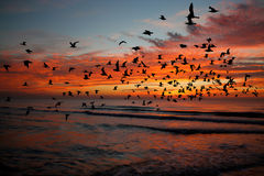 Bird over sea on Morning time Stock Photos
