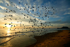 Bird over sea on Morning time Stock Images