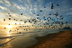 Bird over sea on Morning time Royalty Free Stock Photography