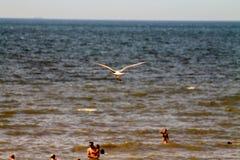 Bird over the sea, North sea beach, The Netherlands Stock Photo