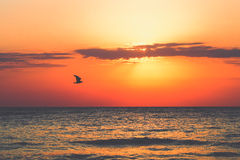 Bird over the sea at sunrise. Sunrise at seaside with sun, waves and birds in the morning Royalty Free Stock Photos