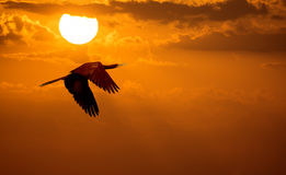 Bird over sunny autumn background Stock Images
