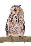 Bird owl isolated Stock Photo