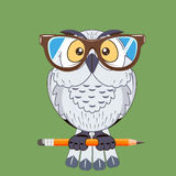 Bird owl symbol of wisdom. Vector image bird owl symbol of wisdom Stock Photography