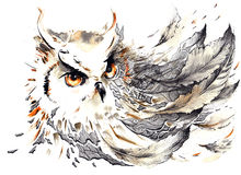 Bird. Painting of gazing predatory owl Stock Images