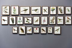 Bird Painting Wall Royalty Free Stock Photo