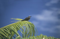 Bird on a palm tree in Polynesia Royalty Free Stock Images