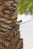 Bird on a palm trunk Stock Photo