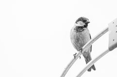 Bird on parabolic antenna. Royalty Free Stock Photos