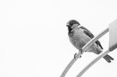 Bird on parabolic antenna. Stock Images