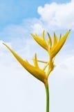 Bird-of-paradise. Tropical yellow bird-of-paradise flower on blue sky background Stock Photography
