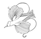 Bird of paradise coloring page royalty free stock image
