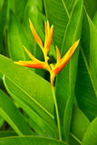 Bird of paradise flower. The bird of paradise flower in the park royalty free stock photo