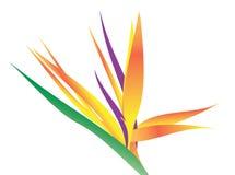 Bird of Paradise Flower Royalty Free Stock Images