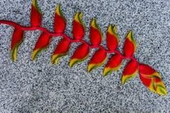 Bird of paradise flower on the granite stone background Royalty Free Stock Photos