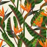 Bird of the paradise flower pattern Stock Image