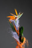 Bird of paradise flower (strelitzia) Stock Image