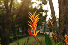 Bird of paradise flower with sunlight Stock Photos