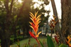Bird of paradise flower with sunlight Stock Photos