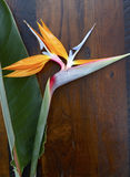 Bird of Paradise flower on wood background. Royalty Free Stock Photos