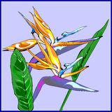 Bird of Paradise Flowers. Two bird of paradise flowers with two leaves Royalty Free Stock Image