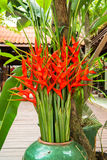 Bird of Paradise flowers in a vase Stock Images