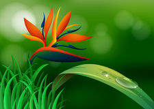 Bird of paradise in the forest Royalty Free Stock Images