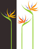 Bird of Paradise. Isolated objects on white and black background. Vector illustration (EPS 10 Royalty Free Stock Images