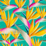 Bird of paradise jungle flower seamless pattern Stock Images
