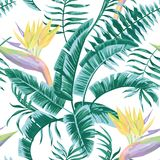 Bird of paradise leaves blue color tropical seamless pattern Royalty Free Stock Images