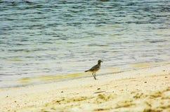 Bird in Paradise. @Palawan Beach, instinct Stock Images