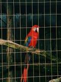 Bird of paradise royalty free stock photography