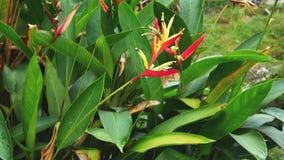 Bird of Paradise plants stock video footage