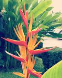 Bird of paradise. Bird of paradise after raining in the garden Royalty Free Stock Photography