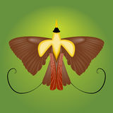 Bird of paradise. Vector illustration Royalty Free Stock Image