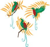Bird of paradise vector illustration set Stock Images