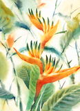 Bird of Paradise Watercolor Flowers Illustration Hand Painted Stock Photos