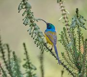 Bird in park, Cape town royalty free stock image