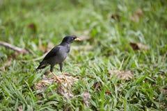 The bird at park Royalty Free Stock Photos