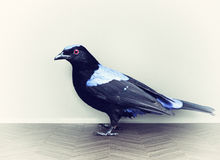 Bird on the parquet stock image
